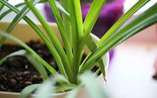 Запрещенные комнатные растения в детском саду